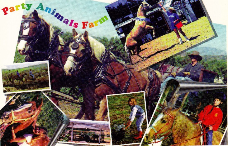 Party Ponies and Pets Petting Zoo Pony Rides Birthday Parties About Us